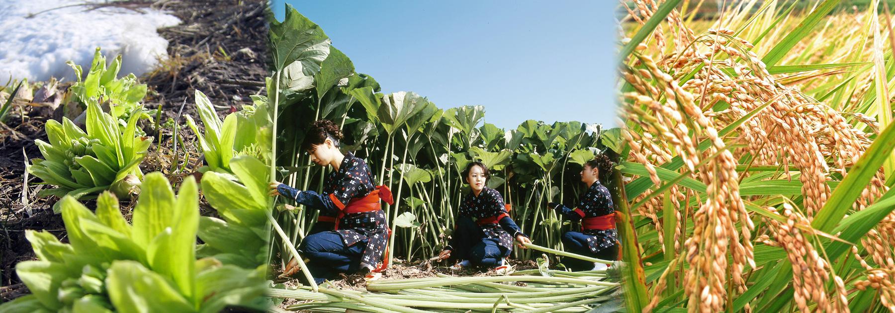 秋田県栄養士会